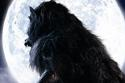 Werewolf - The Beast Among Us DVD