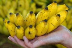 Cocaine worth more than $1M found in supermarket banana deliveries