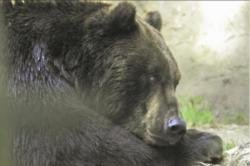 Black bears in backyard bust-up over female