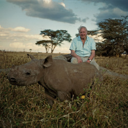 Africa and David Attenborough
